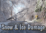 Yards By Us - Snow damaged tree services